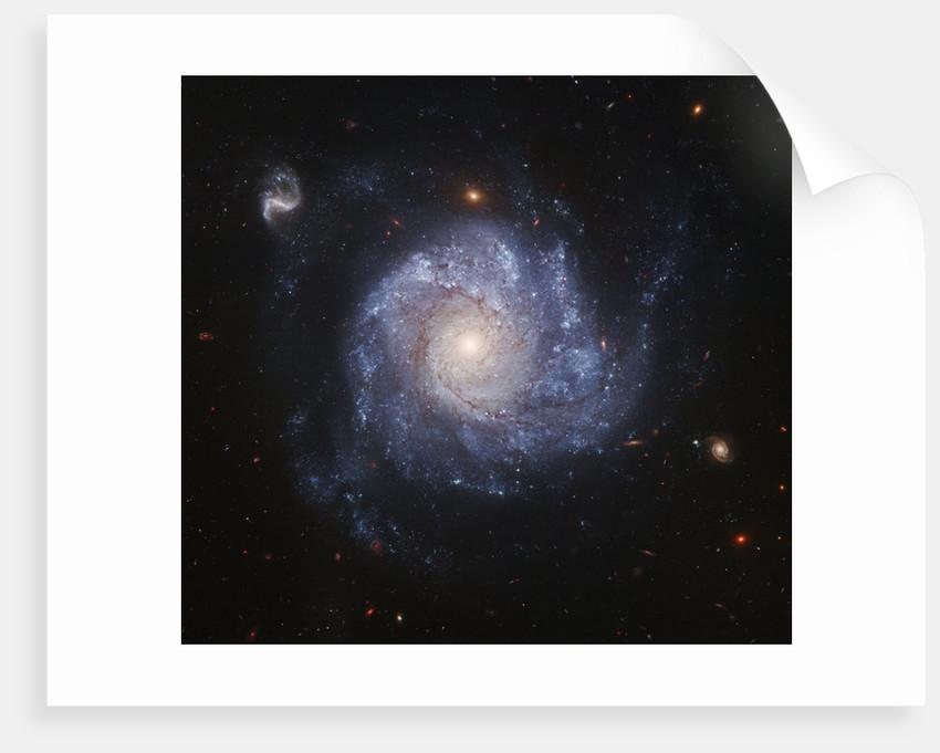 NGC 1309 Galaxy by Corbis