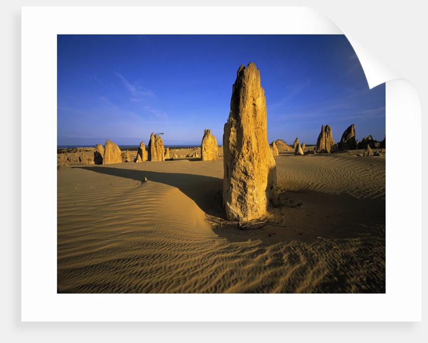 Limestone Pillars in Desert by Corbis