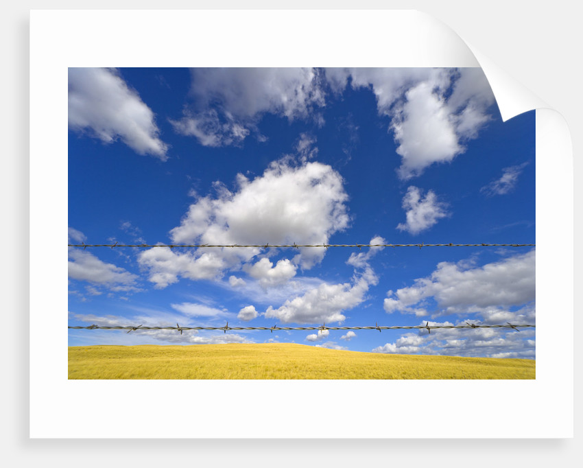 Barbed Wire Fence, Cumulus Clouds by Corbis
