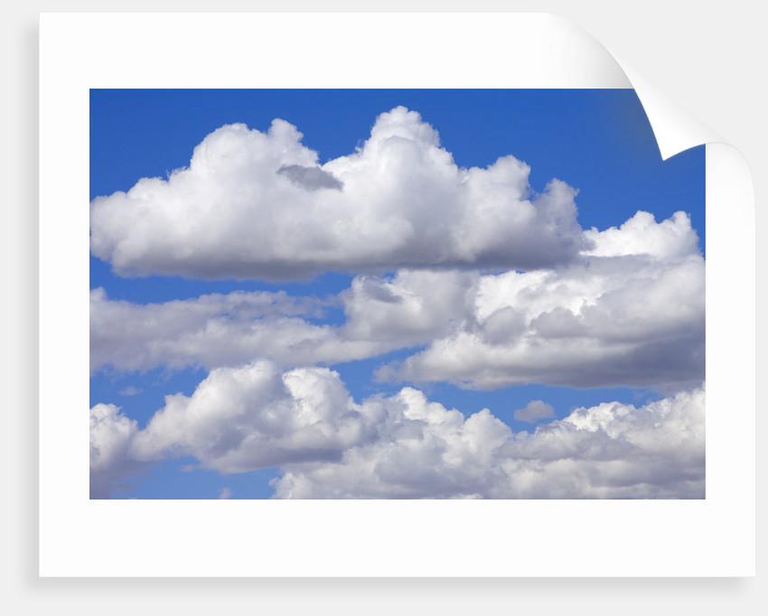 Cumulus Clouds Floating in Clear Blue Sky in Fall by Corbis