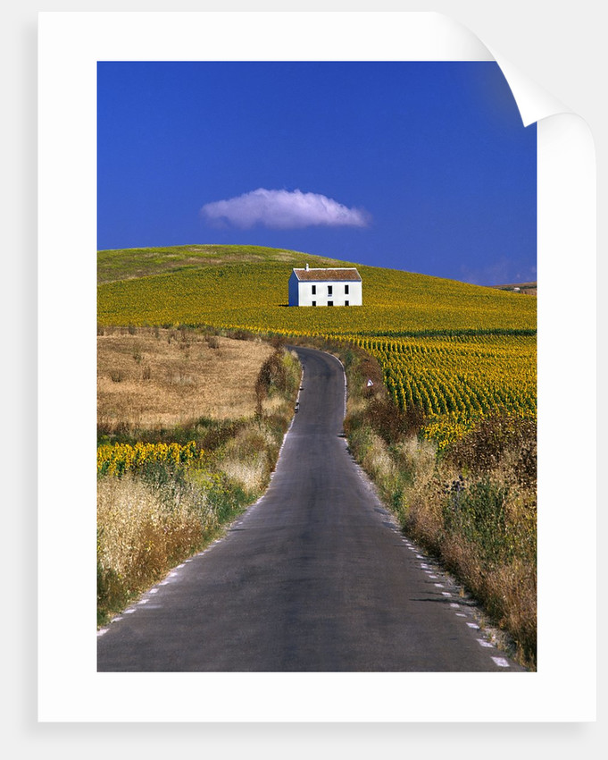 Farmhouse by Country Road by Corbis