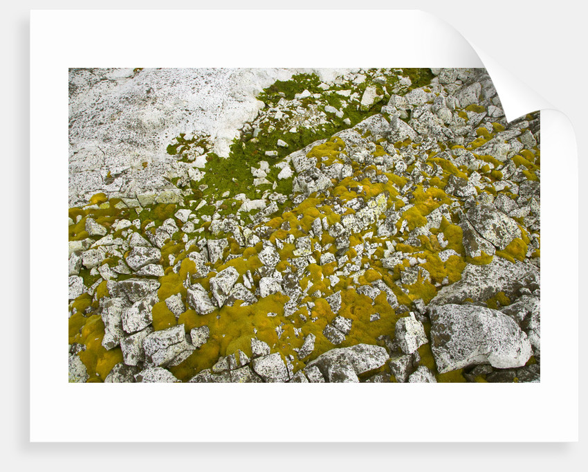 Moss and Lichens Growing on Rocks by Corbis