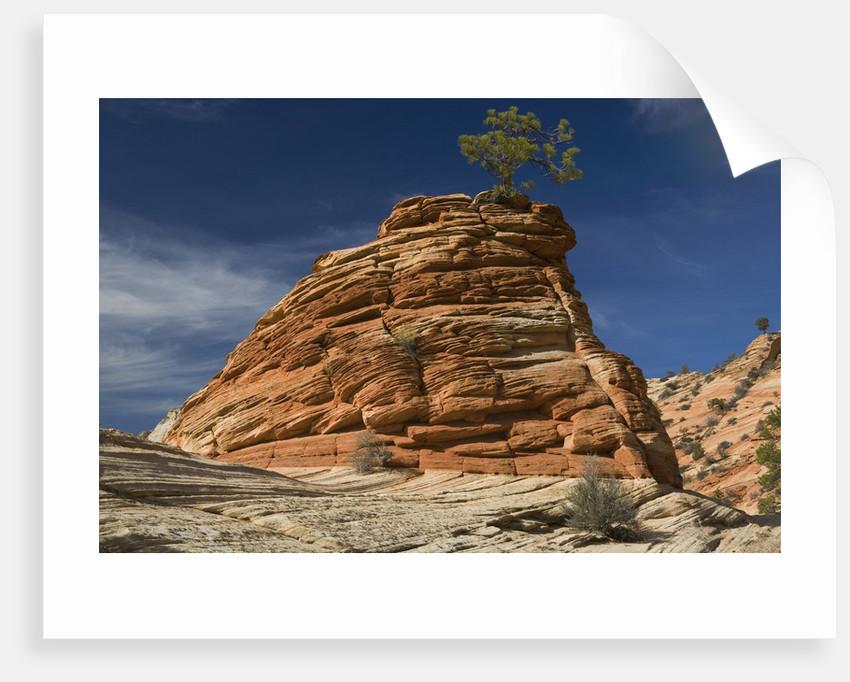 Pinyon Pine atop Sandstone Hoodoo by Corbis