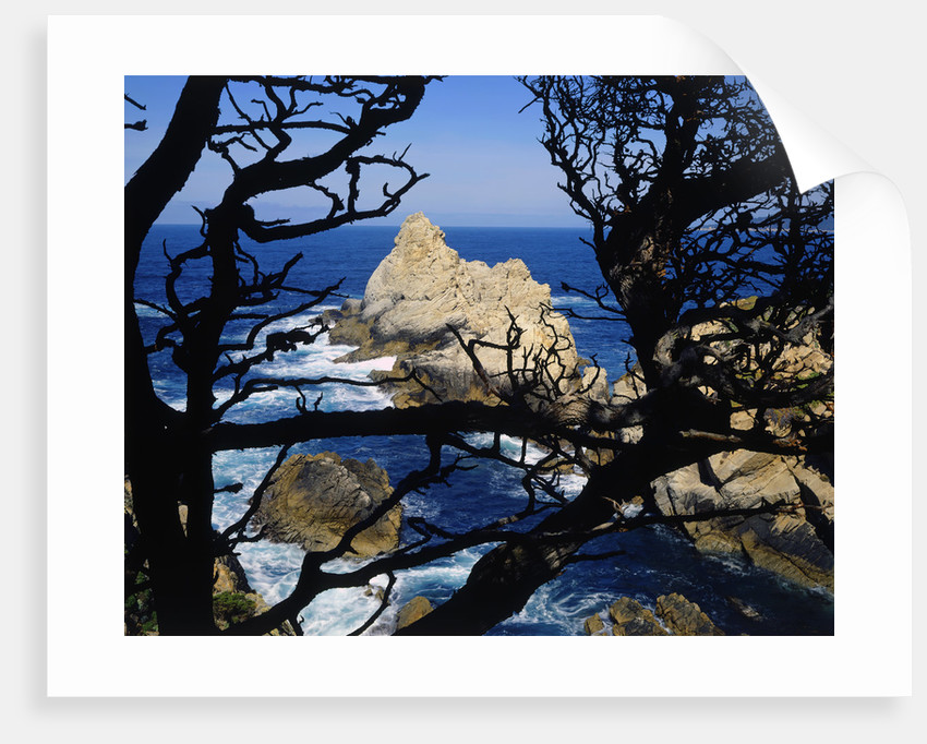 Cypress Trees at Point Lobos by Corbis