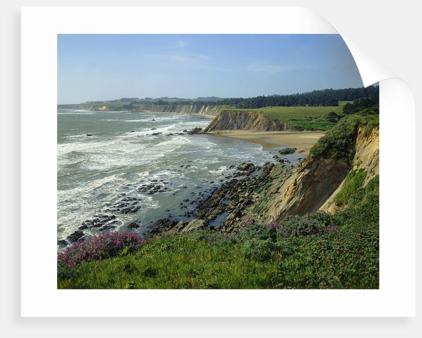 Sonoma Coast by Corbis
