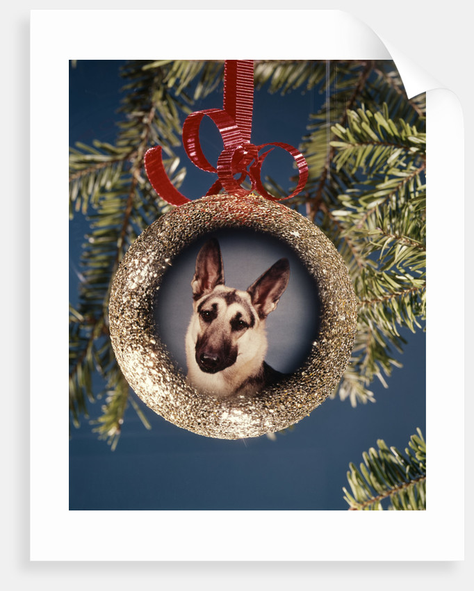 1960s 1970s Picture German Shepherd Dog On Christmas Tree Ornament by Corbis