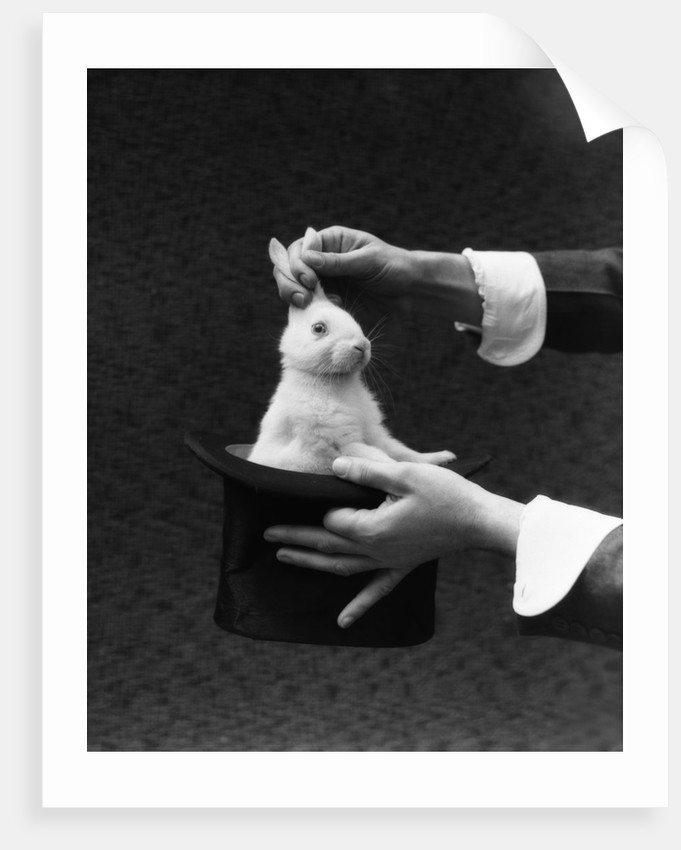 1930s Magician Hands Pulling Rabbit Out Of Top Hat by Corbis