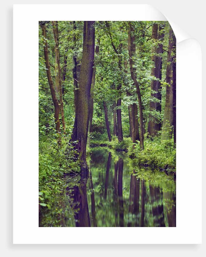 Forest and stream by Corbis