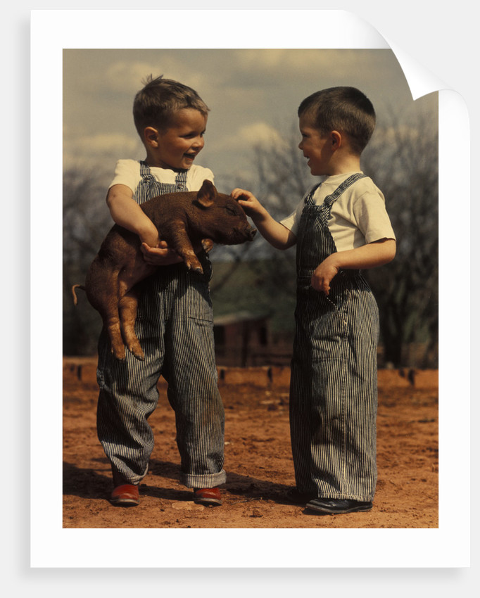 Two small boys bib overalls with piglet by Corbis