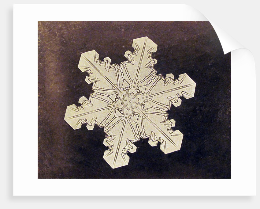 Study of a snowflake by Corbis