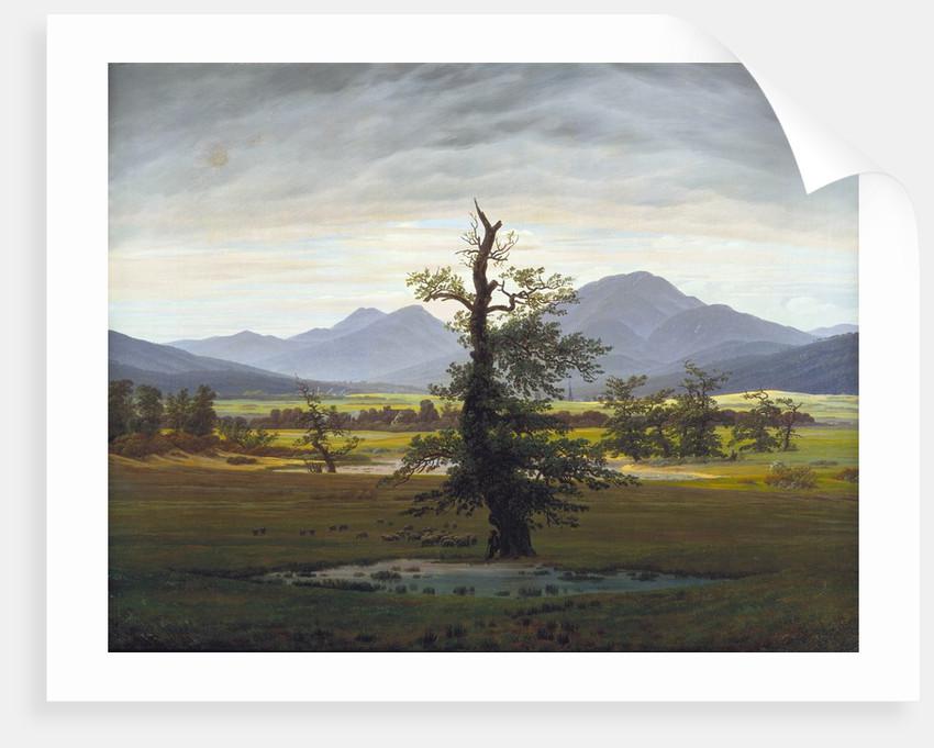 The Solitary Tree (Village Landscape in Morning Light) by Caspar David Friedrich