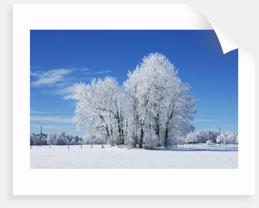 Winter landscape with snow covered trees by Corbis