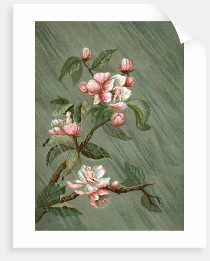 Fairies hiding in rose blossoms in the rain by Corbis