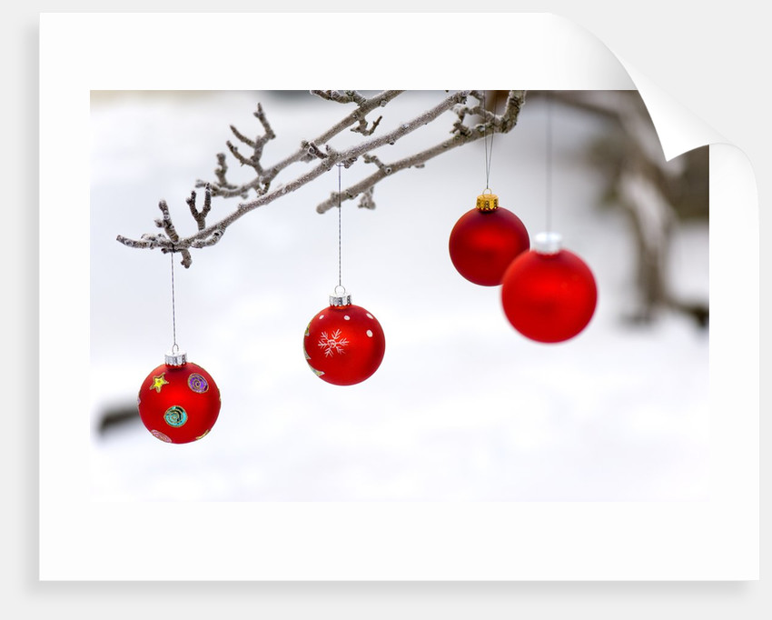 Close-up of red baubles hanging on branch against blurred background by Corbis