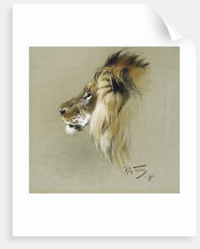 A Lion's Head by Richard Friese