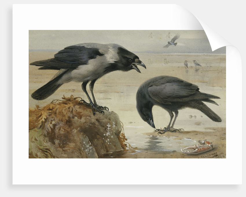 A Hooded Crow and a Carrion Crow by Archibald Thorburn