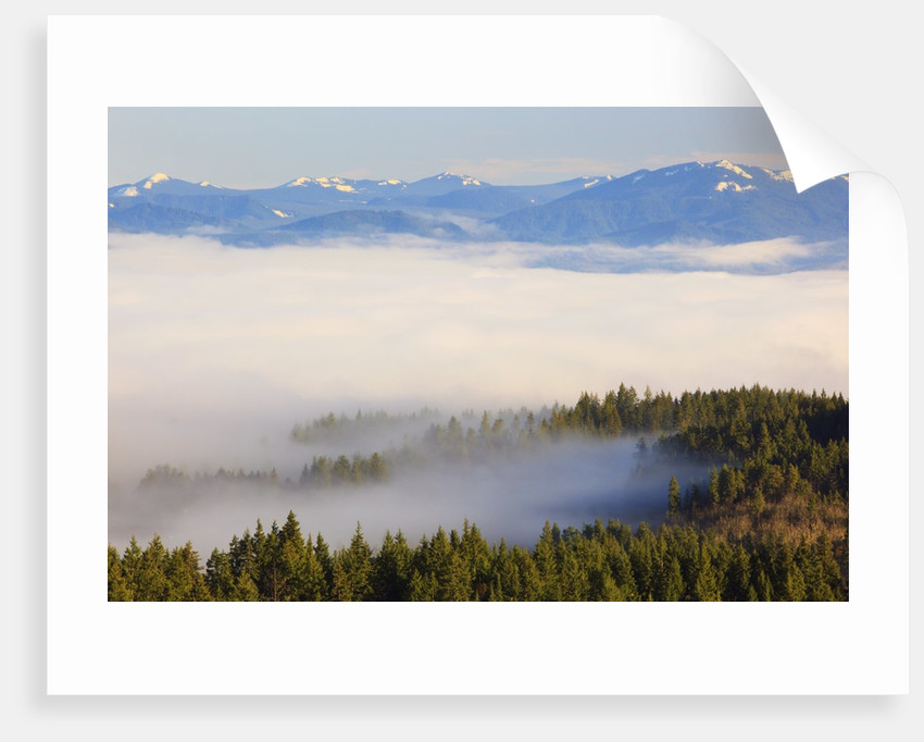 Morning fog covers Hood River Valley, Oregon, USA by Corbis