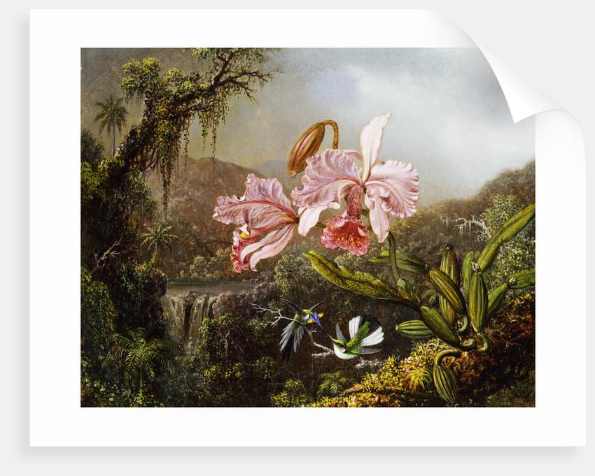 Orchids and Hummingbirds in a Brazilian Jungle by Martin Johnson Heade