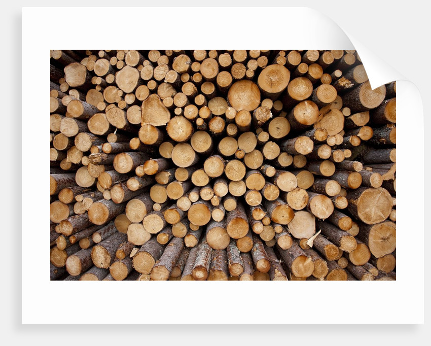Log Pile at Sawmill, Gulliver, Michigan