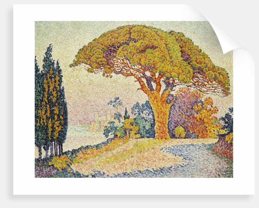 Quelque chose de nouveau assez Pine Trees at Bertaud, Saint- Tropez (Provence) posters & prints &RG_75