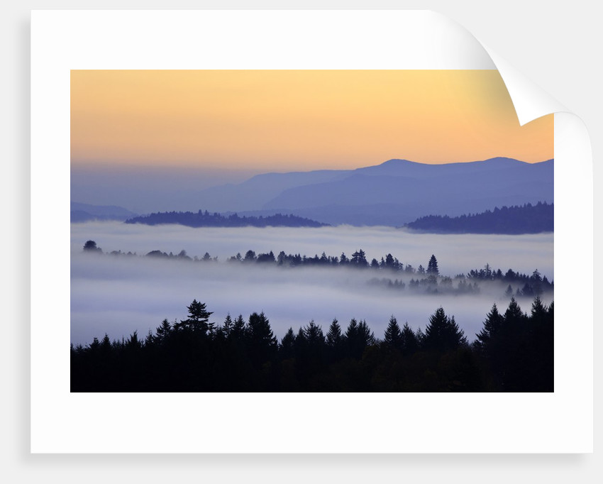 Sunrise through morning fog adds beauty to Happy Valley, Oregon, Pacific Northwest by Corbis