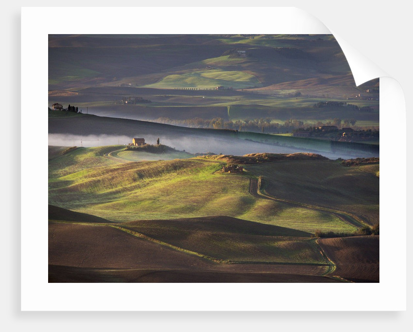 Morning light over the fields of Winter Wheat above the Tuscan Landscape by Corbis