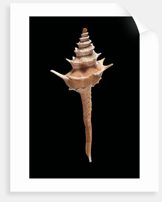 Columbarium pagoda by Corbis
