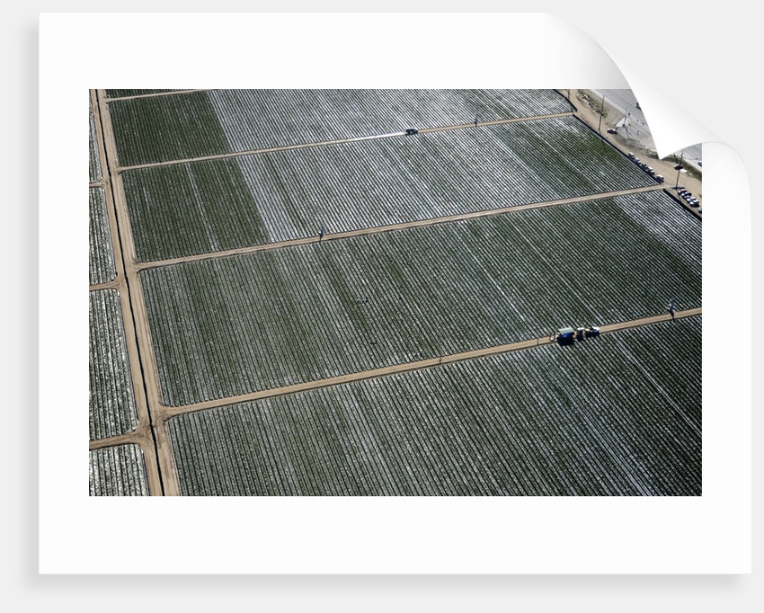 Aerial view of a working farm in Oxnard, California by Corbis