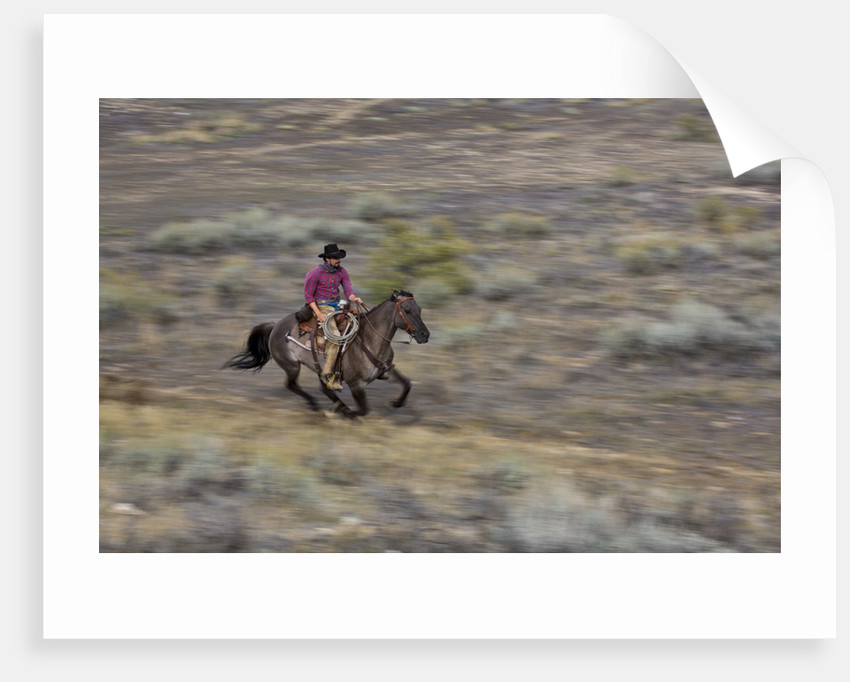 Cowboy riding at full speed in motion by Corbis