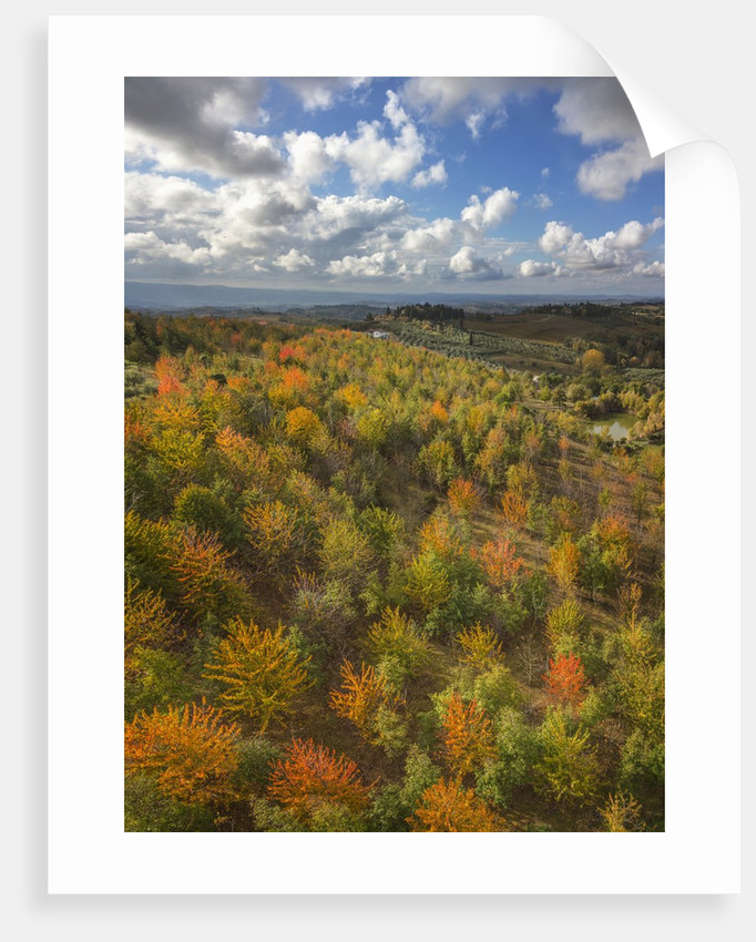 Fruit trees grove near Lucardo by Corbis