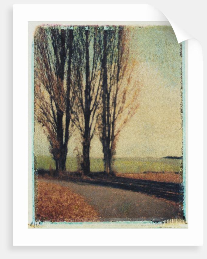 3 Poplars Late Fall by Jennifer Kennard