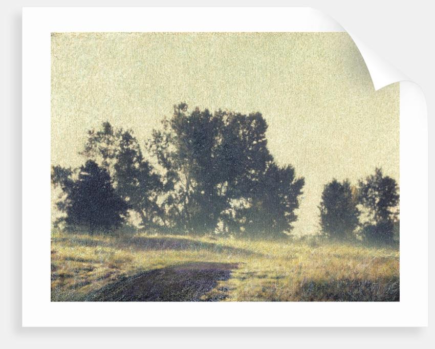 Foggy Morning by Jennifer Kennard