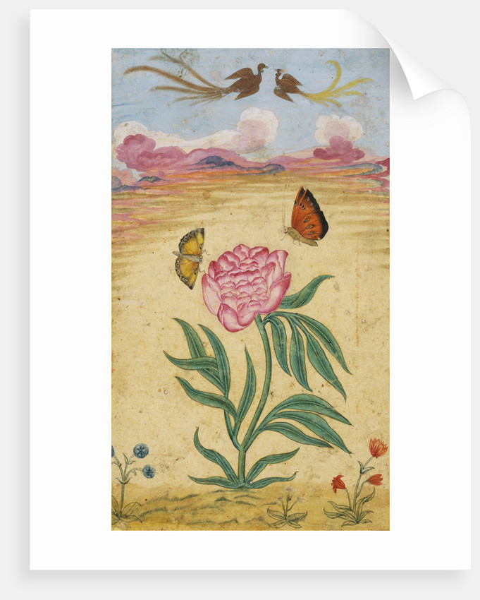 Mughal Miniature Painting Depicting a Peony with Birds of Paradise and Butterflies by Corbis