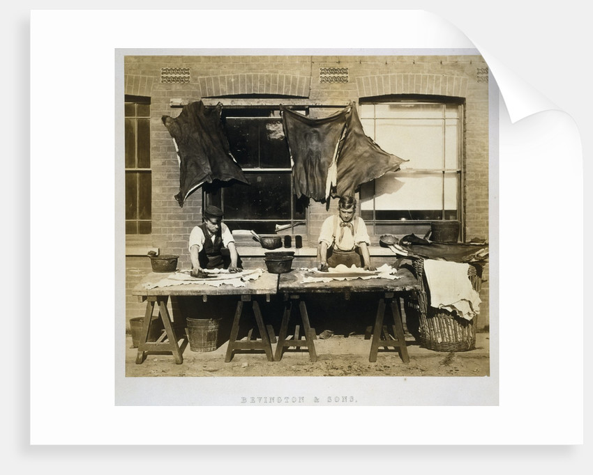 Photograph of Leather Dying for Glove-Making at Bevingtons and Sons by Corbis