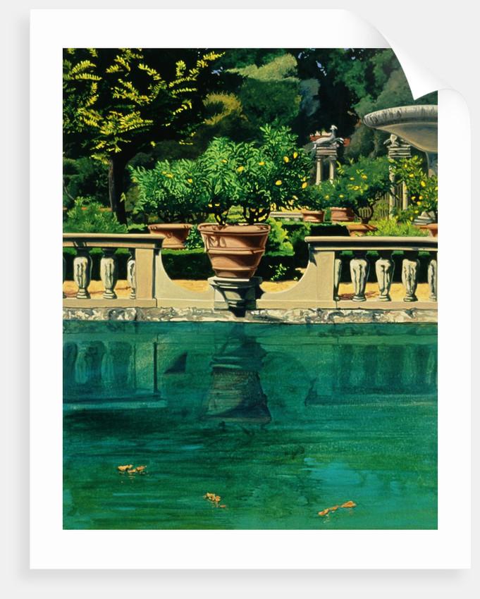 The Lemon Tree Fountain by Anne Belov