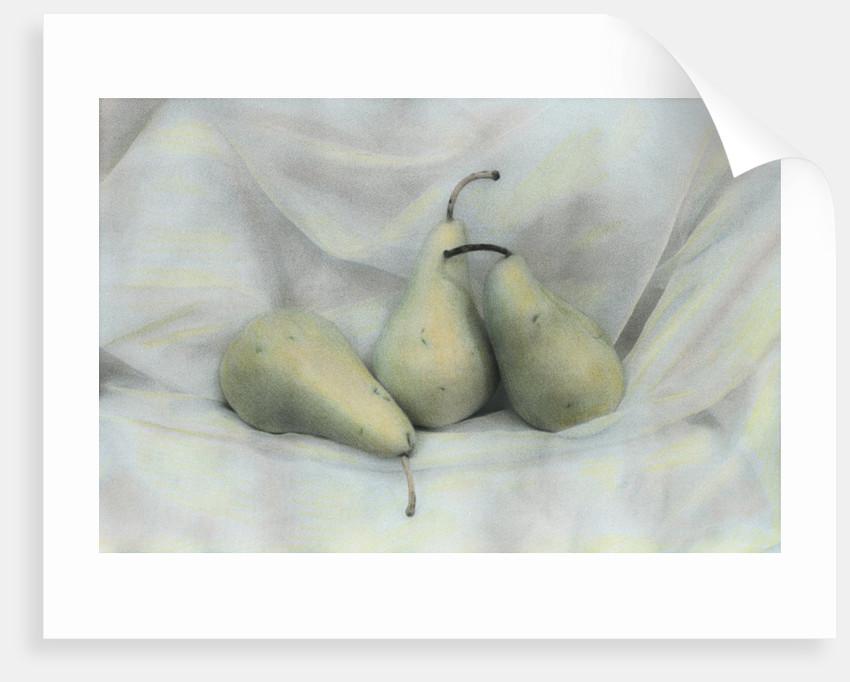 Pear Study #1731 by Kim Koza