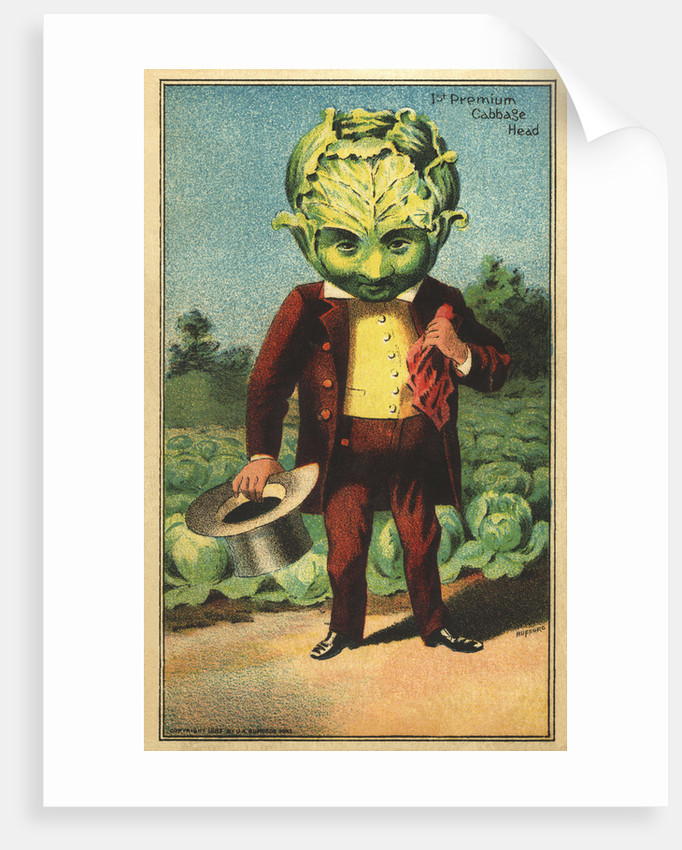 1st Premium Cabbage Head Trade Card by Corbis