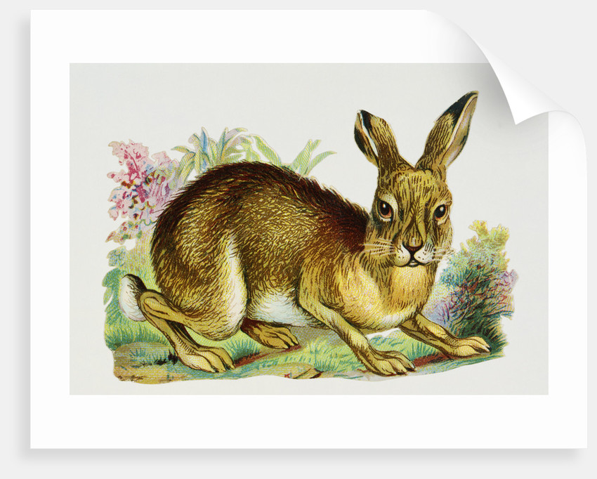 Illustration Depicting a Brown Rabbit by Corbis