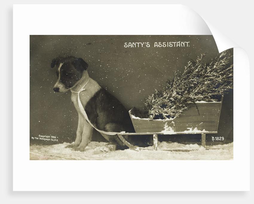 Santy's Assistant Postcard by Corbis