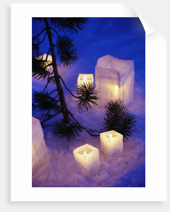 Candles Sitting on Snow by Tree by Corbis