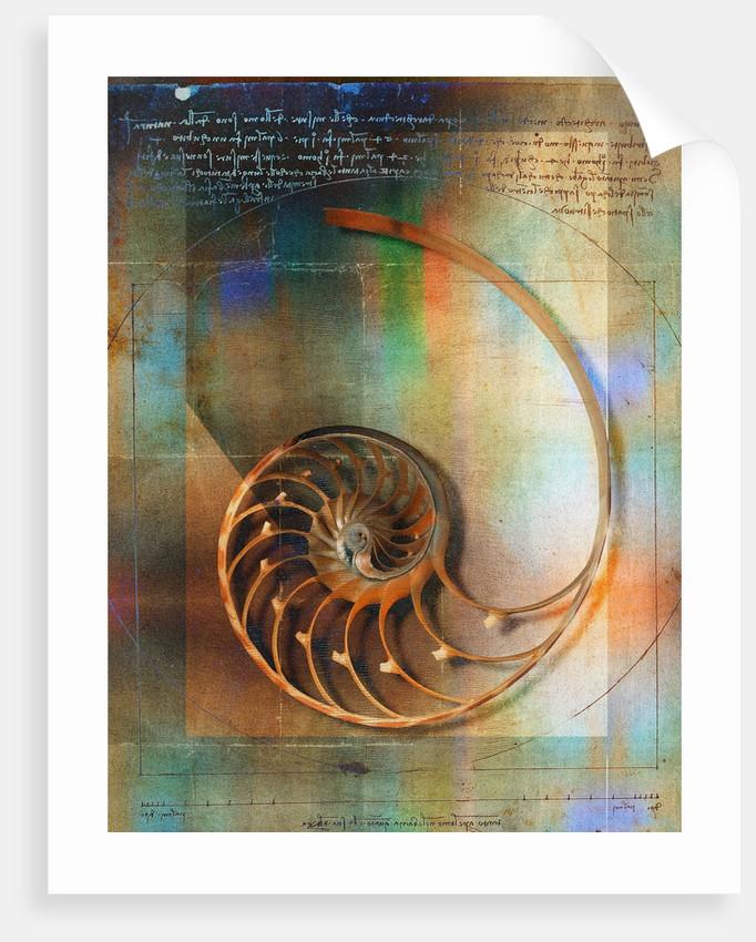 Seashell and Handwriting by Corbis