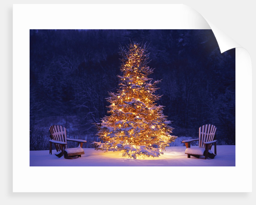 Snow Covering Adirondack Chairs by Lit Christmas Tree by Corbis