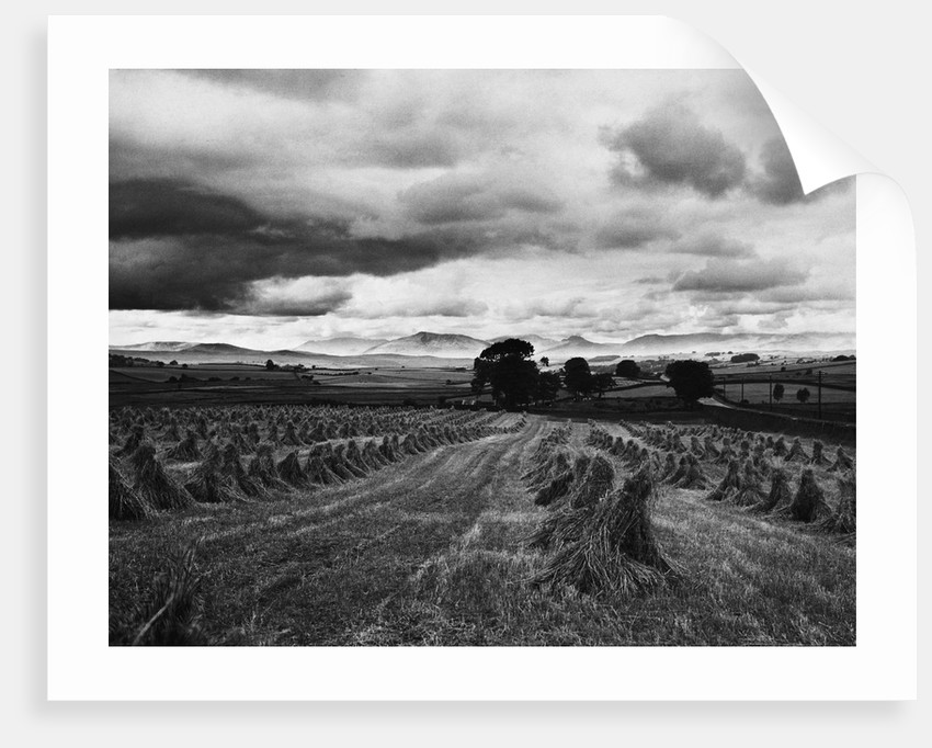 Welsh Wheat Fields With Snowdonia in the Distance by Corbis