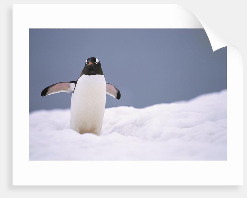 Penguins Arctic Picture SINGLE CANVAS WALL ART Print