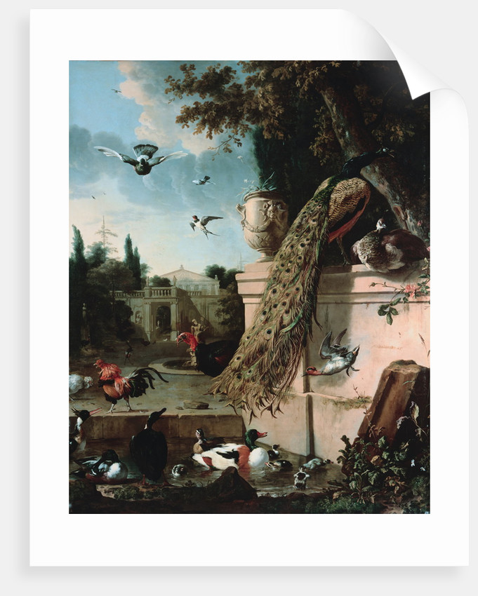 A Peacock and other Birds in the Gardens of a Palace by Melchoir d'Hondecoeter