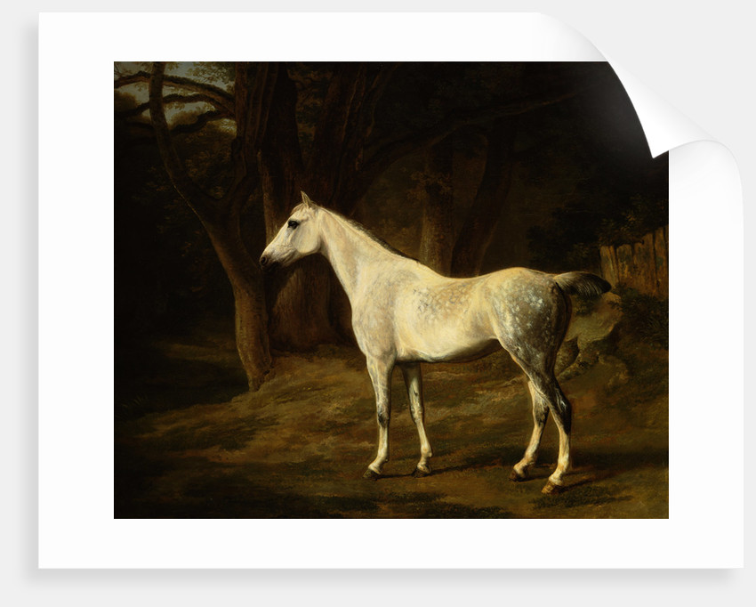 A Grey Hunter in a Woodland Landscape by Agasse Jacques Laurent
