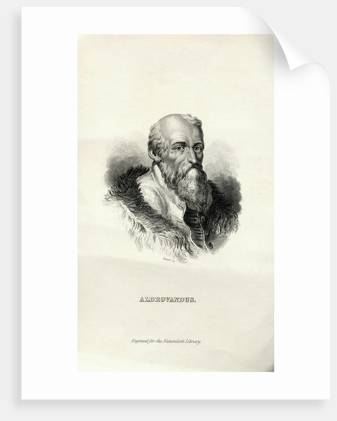 Engraving of Ulisse Aldrovandi by Corbis