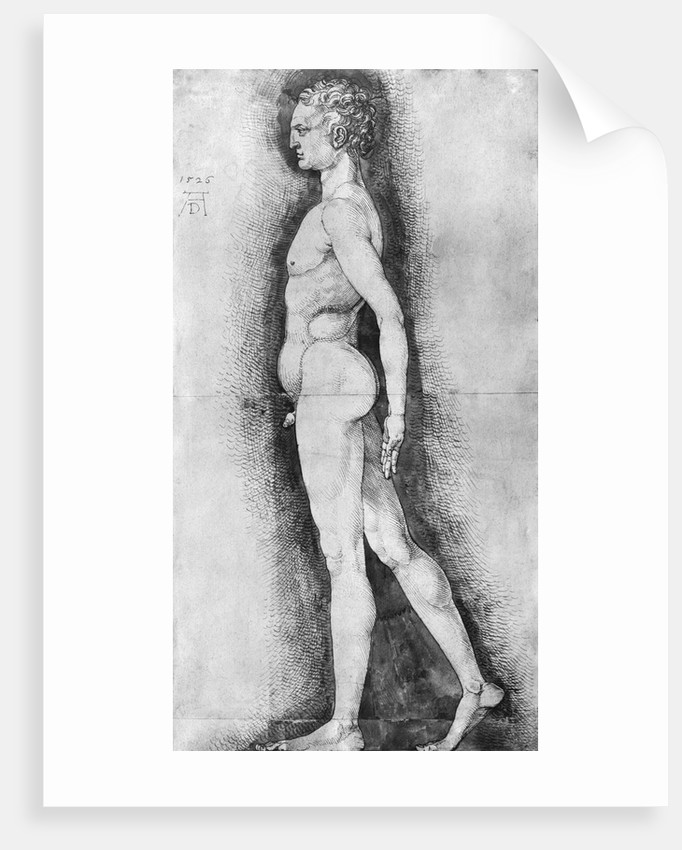 Albrecht Durer Study Of Male Anatomy Posters Prints By Corbis