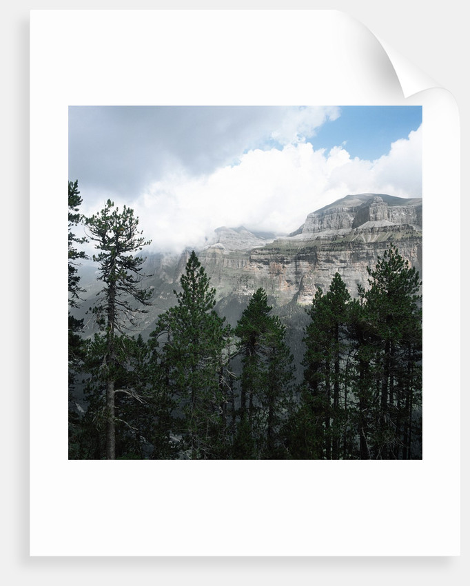 Coniferous Forest Beside a Large Canyon by Corbis