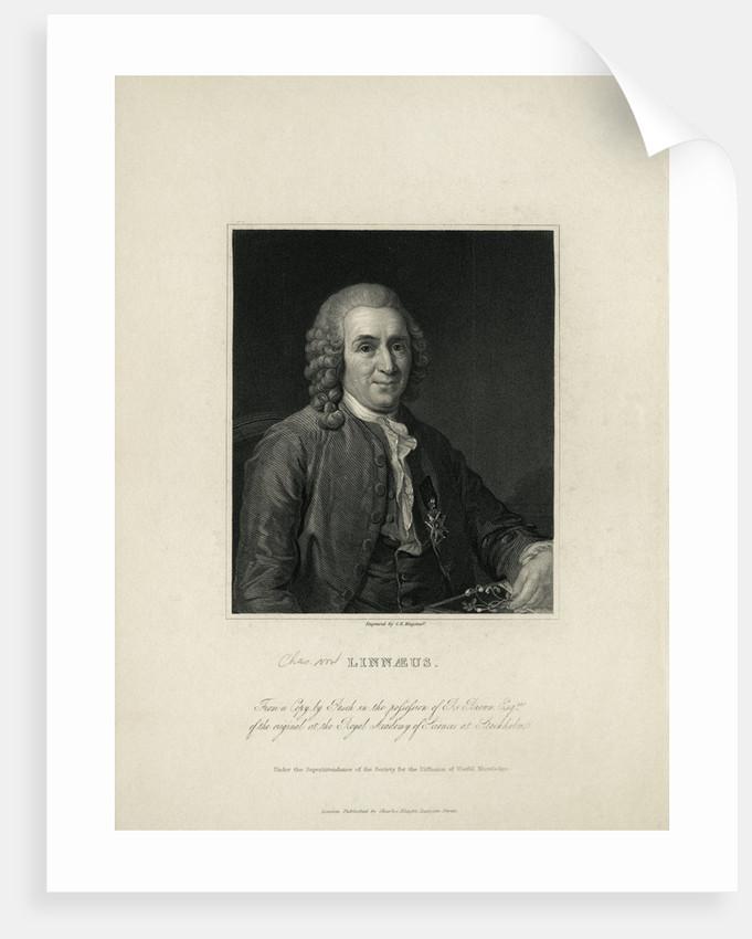 Portrait of Carl Von Linne by Corbis
